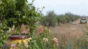 Bondolio Olive Oil Farm