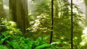 Things to Do in Redwood National Park vca_resource_delnorte_256x180