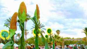 Saguaro Palm Springs vca_resource_honkytonk_256x180