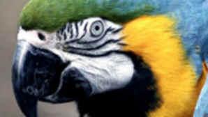 L.A. Zoo – Animals & Plants
