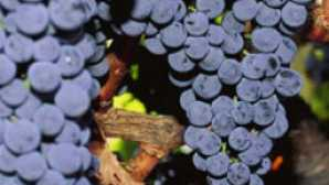 California's Classic Wine Roads vca_resource_mendocinowine_256x180