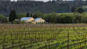 6 Awesome Sonoma County Wine Tasting Experiences vca_resource_quivirawine_256x180