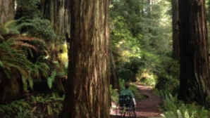 Hiking in Redwoods National Parks