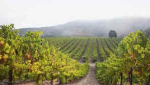 Wine Tours Santa Barbara