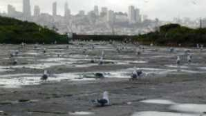 Spotlight: Alcatraz vca_resource_seabirdsofalcatraz_256x180