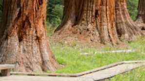 Parques nacionais Sequoia e Kings Canyon vca_resource_sequoiadayhikes_256x180