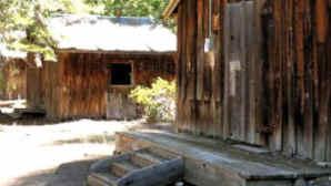 Pine log camp