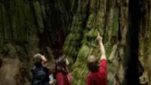 Visit Redwoods