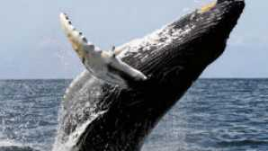 Spotlight: Santa Cruz vca_resource_whalewatchingsantacruz_256x180