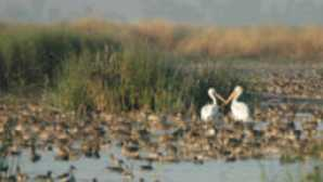 Birds at Yolo Bypass