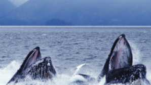 Spotlight: Mendocino vca_resources_whalewatching_256x180_1