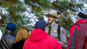 Guided adventures at Yosemite  yosemite-ranger-tree-walk-snow-cjacoby_hero