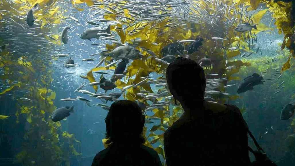 vc_ca101_videothumbnail_fiveamazingthings_monterey_aquarium_1280x7202