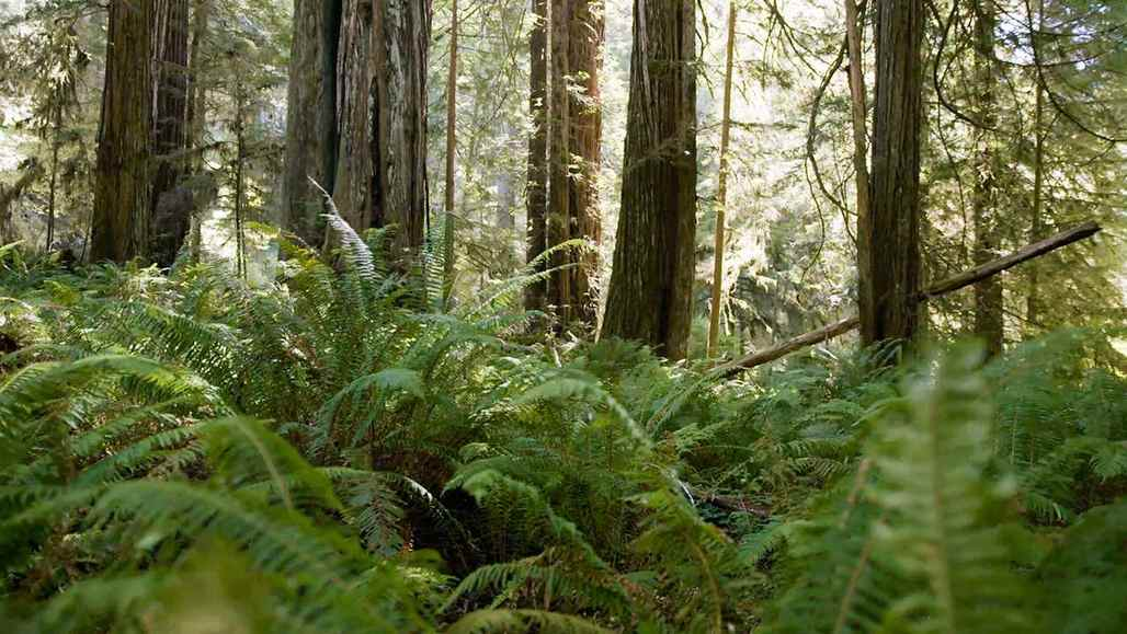 Redwood State and National Parks vc_ca101_videothumbnail_nationalparks_redwood_1280x7202
