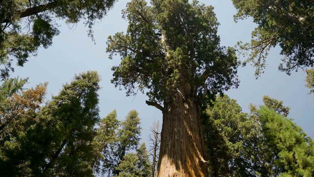 Sequoia & Kings Canyon National Parks vc_ca101_videothumbnail_nationalparks_sequoiakingscanyon_generalsherman_1280x7202