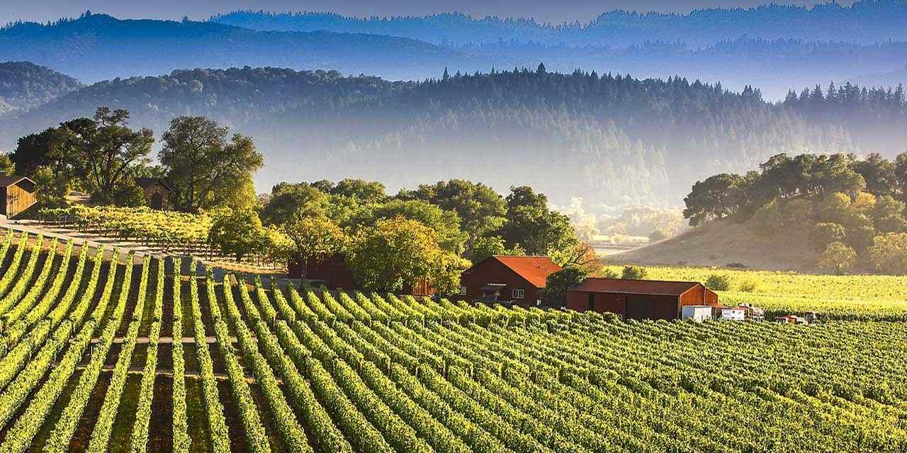 Percorsi enologici classici della California