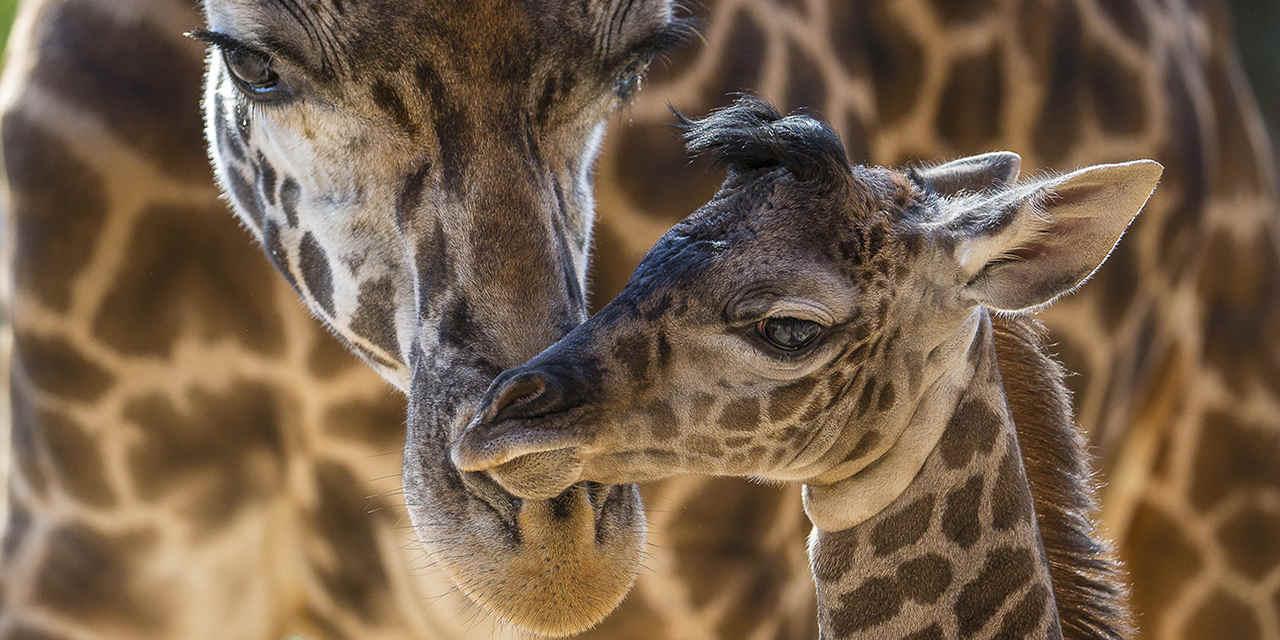 Spotlight: サンディエゴ動物園