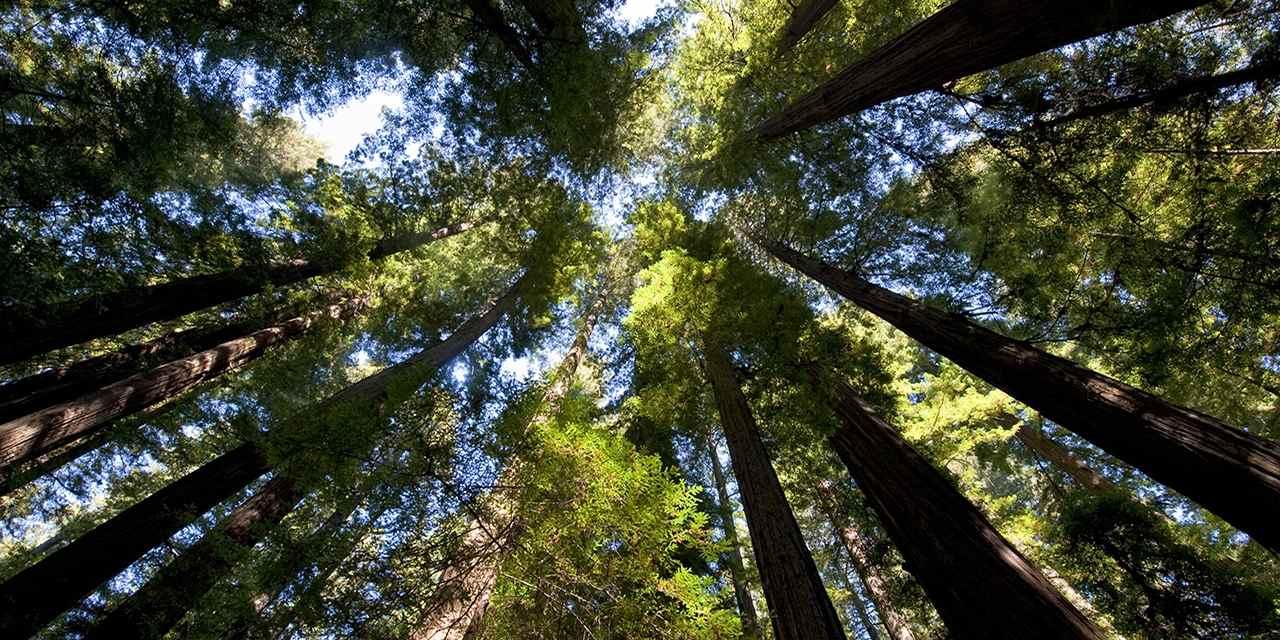 洪堡红杉州立公园