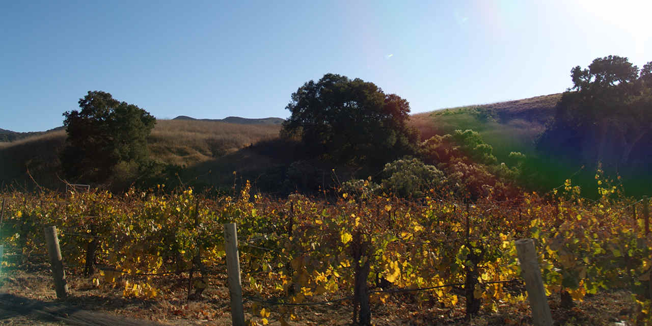 圣巴巴拉:圣丽塔丘陵葡萄酒小径