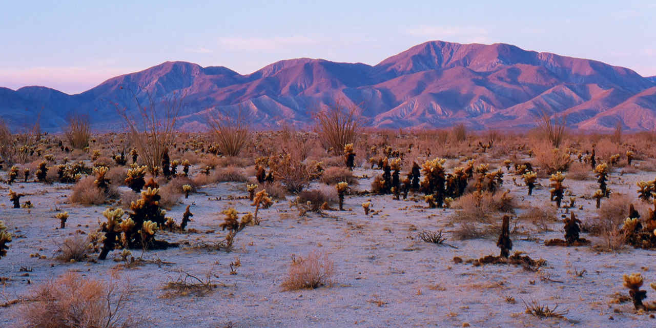 Destaque: Parque Estadual Anza-Borrego Desert