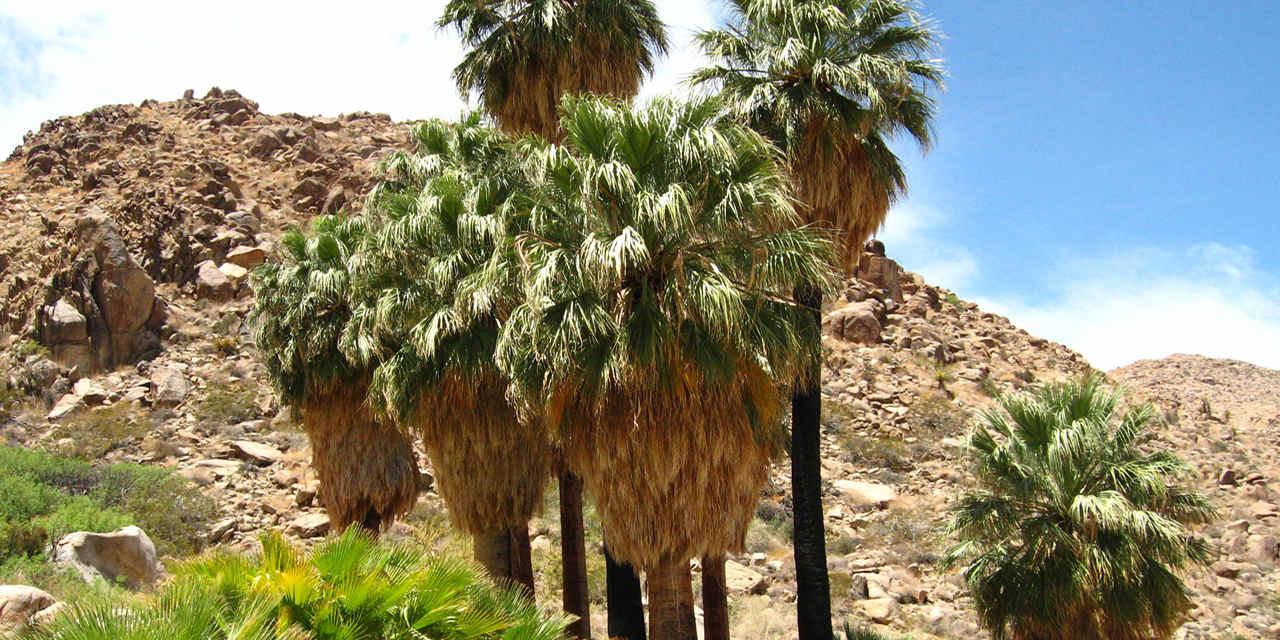 49 棕榈绿洲