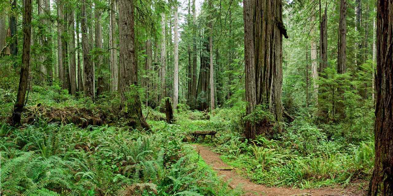 Spotlight: Redwood National & State Parks