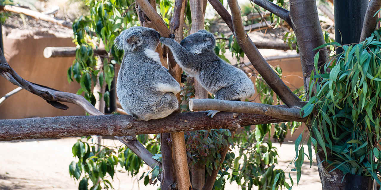 Conrad Prebys Australian Outback