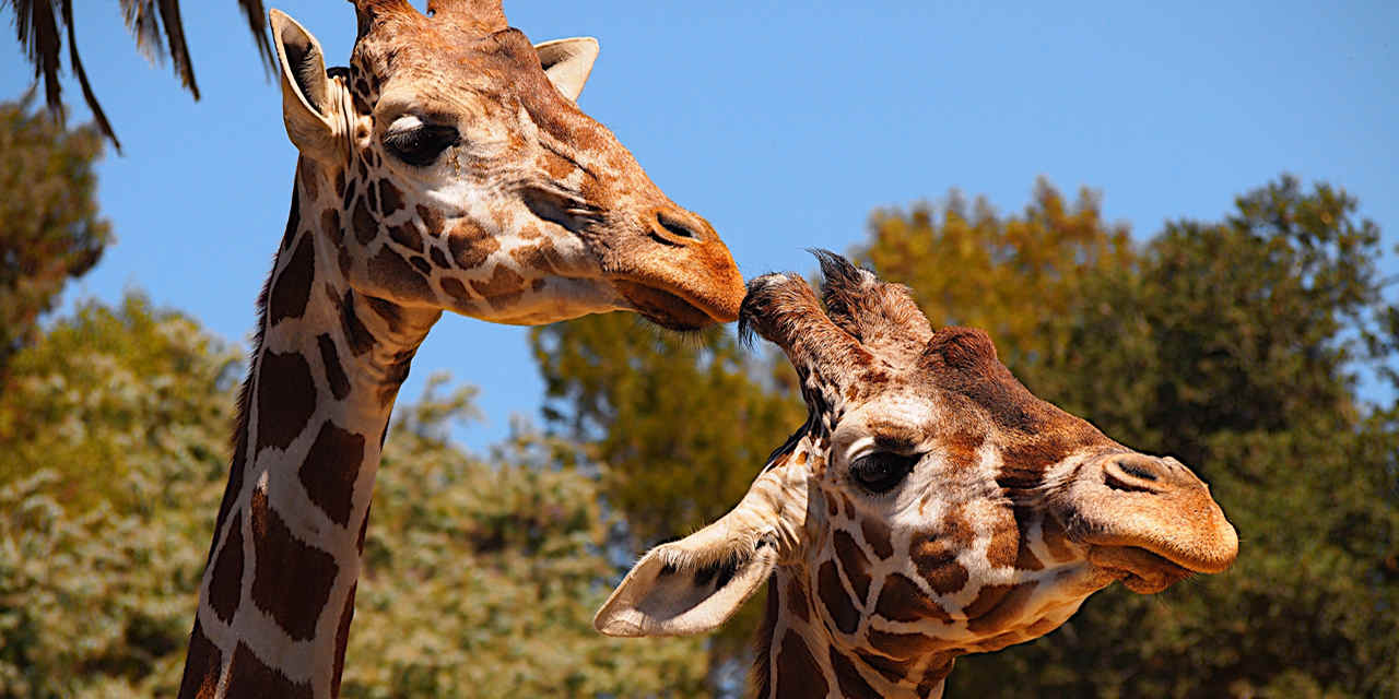 Zoo d'Oakland