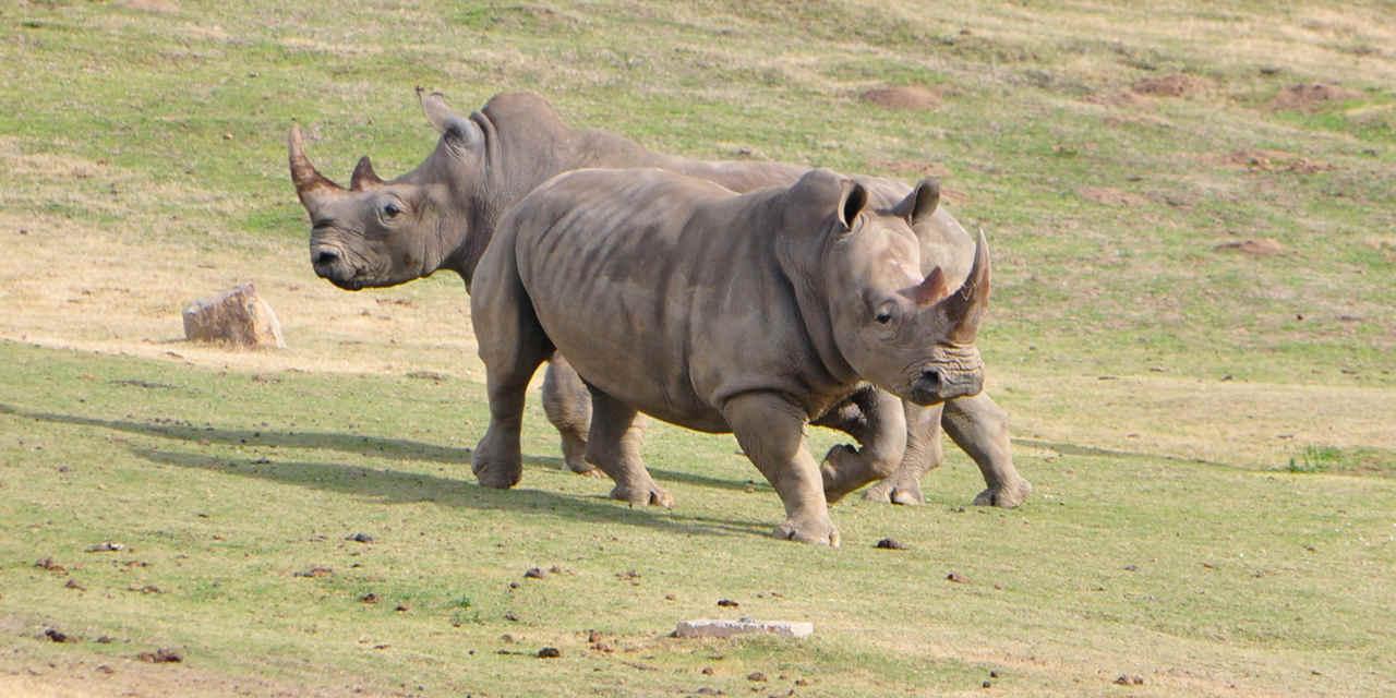 Safari Park del Zoológico de San Diego: Roar 'n' Snore