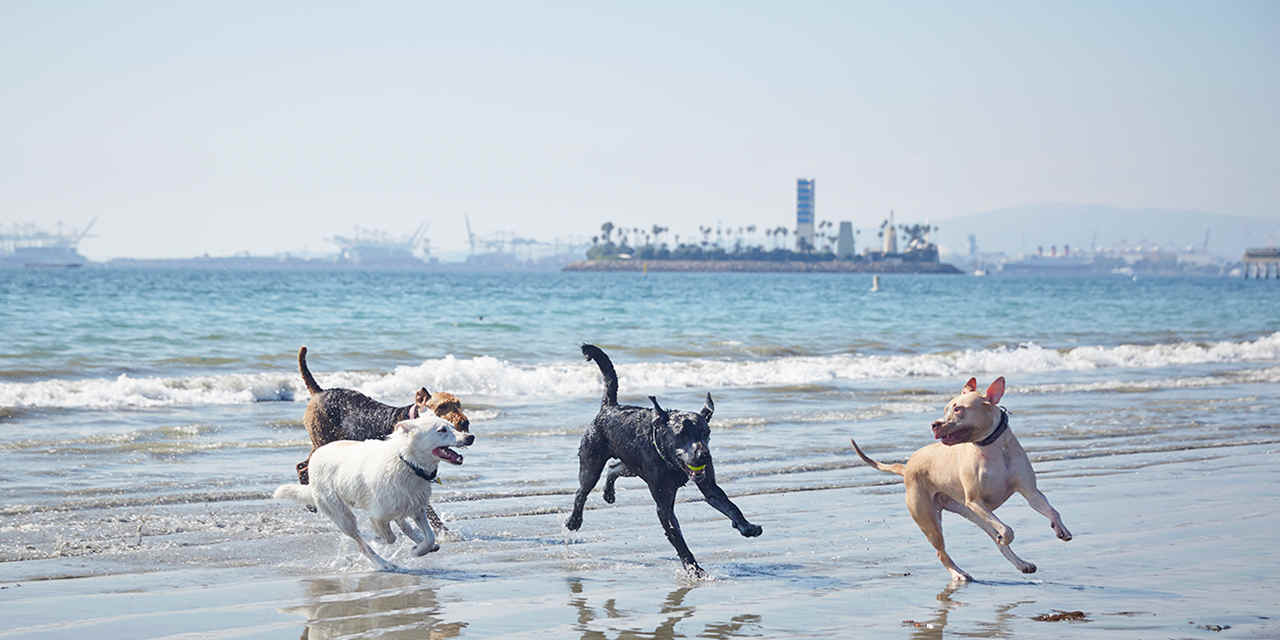 11 Great Dog Beaches