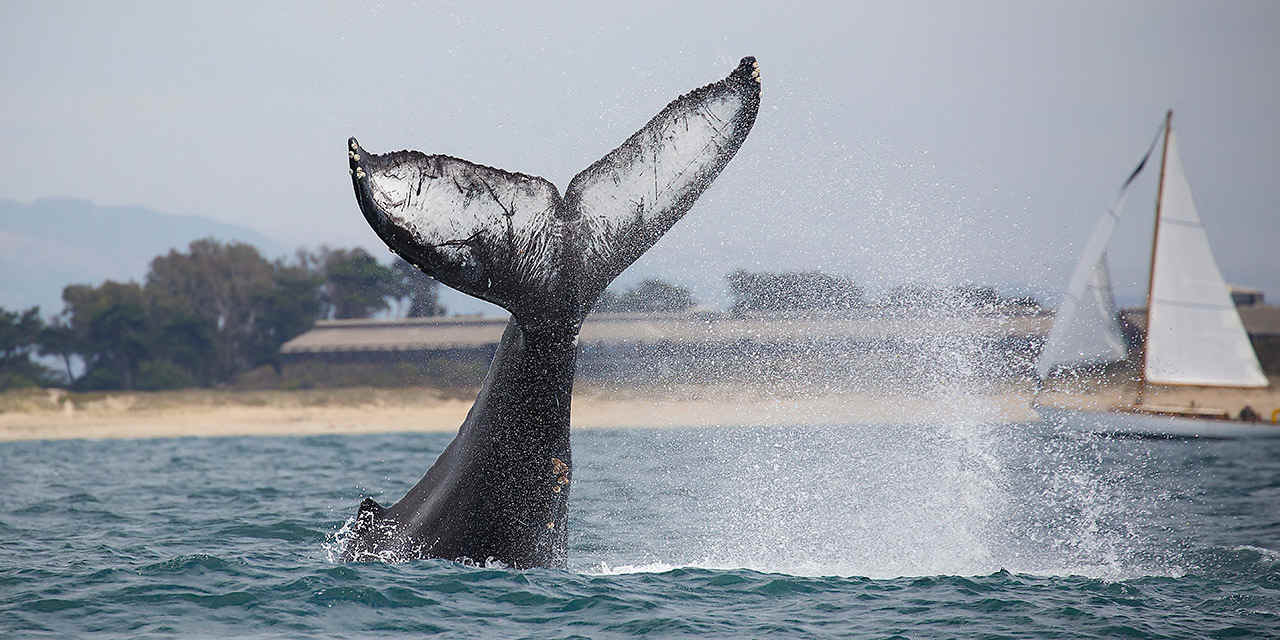 Top Places for Whale Watching in California VC_AprilCalendarEvents_Stock_RF_513665534_1280x640