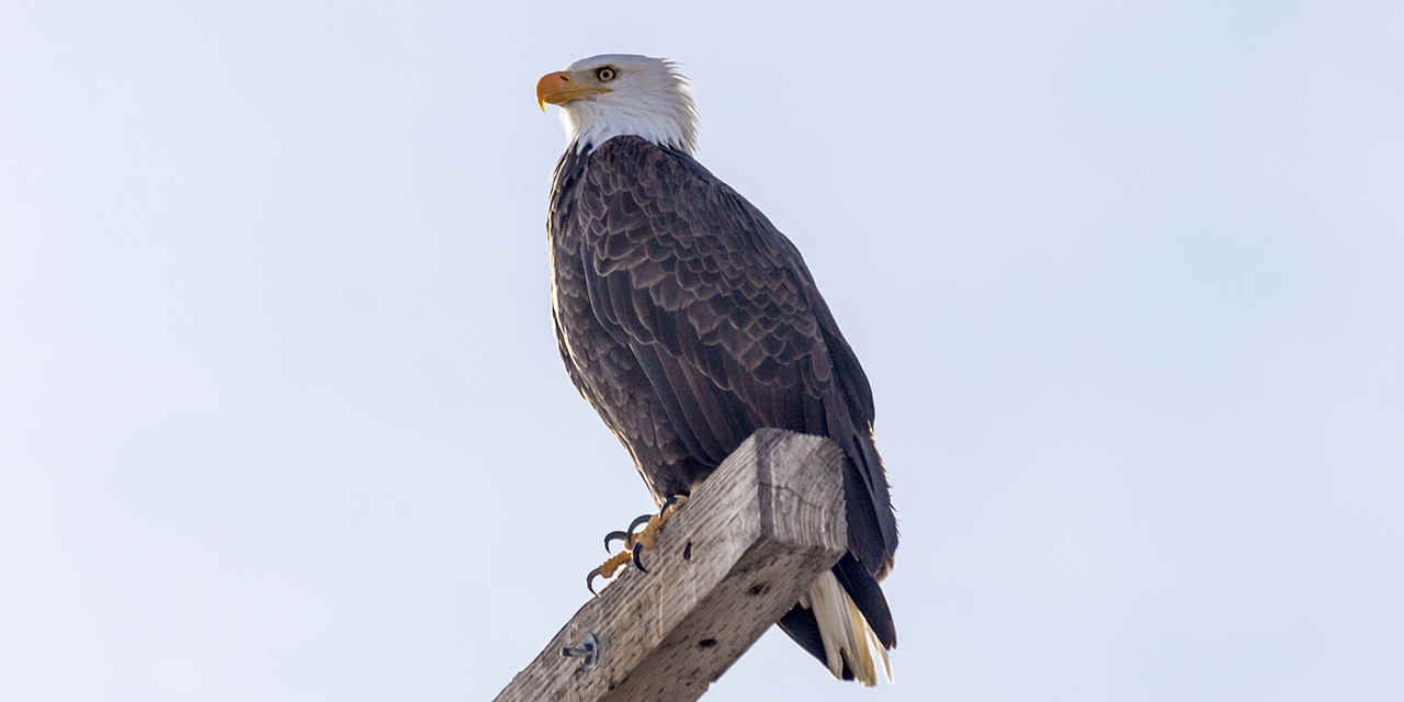 Lake Arrowhead VC_BigBearLakeWinter_Breaker_BaldEagles_Stock_RF_463243131_1280x640