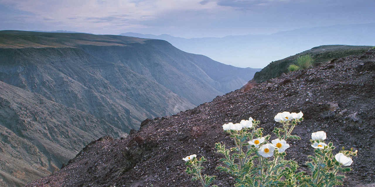 Best Ways to See Death Valley Wildflowers