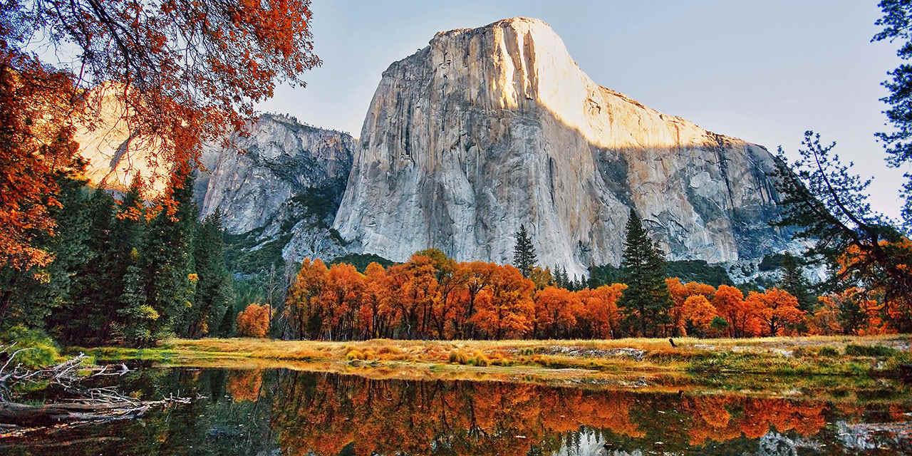 Autumn Leaves in California
