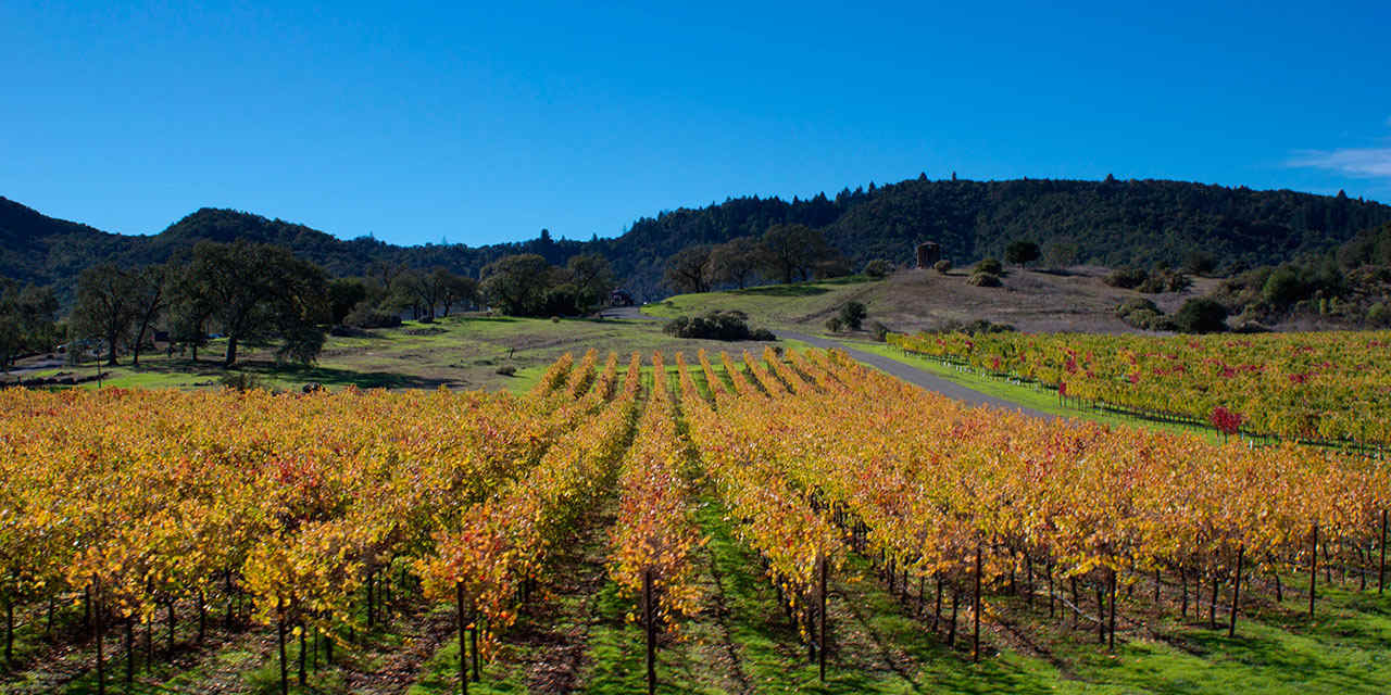 Autumn Foliage in Napa Valley