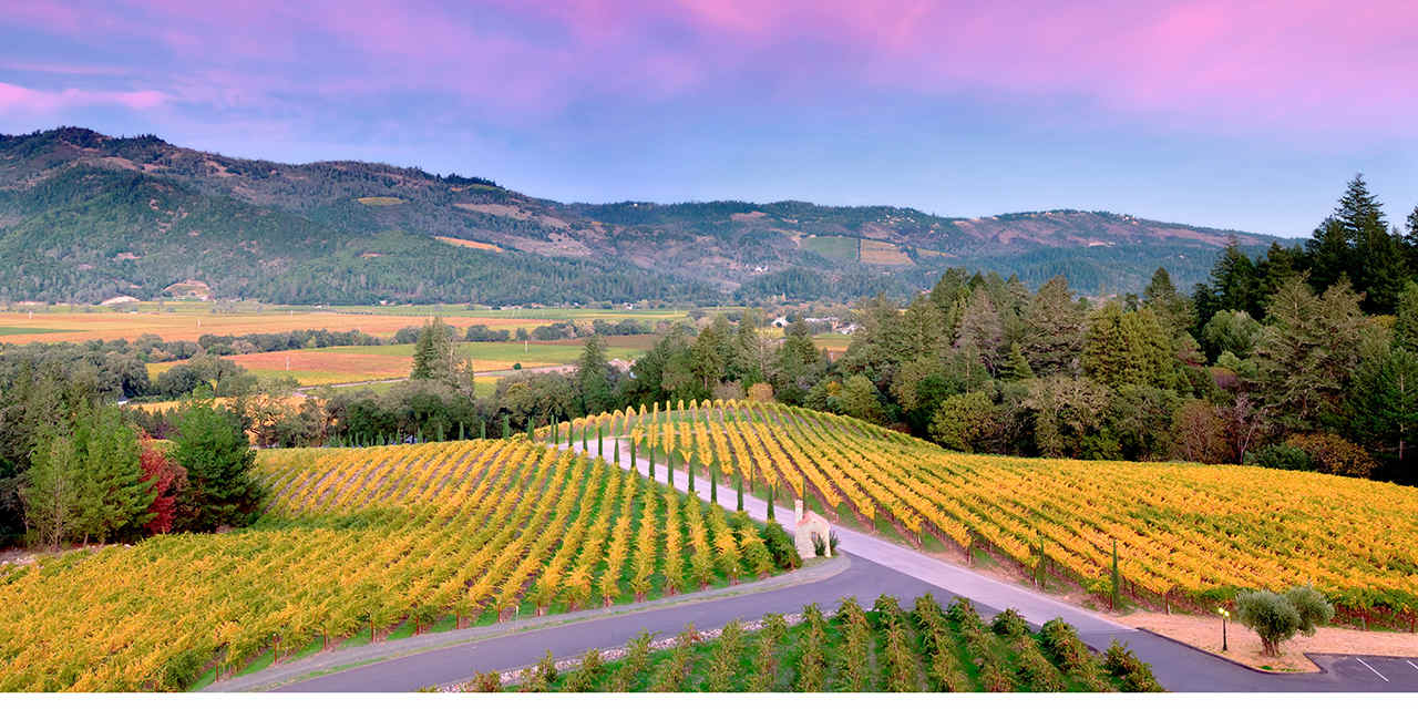 Napa Valley Wines & Wineries