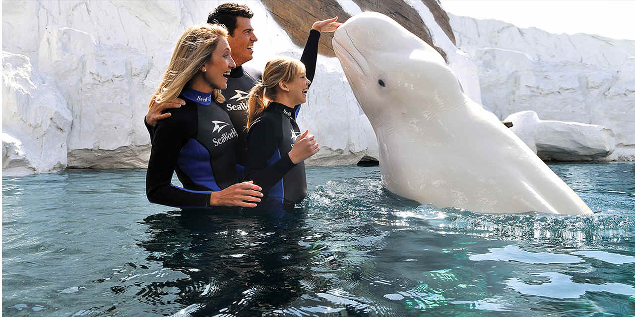 Interacciones especiales con animales en SeaWorld