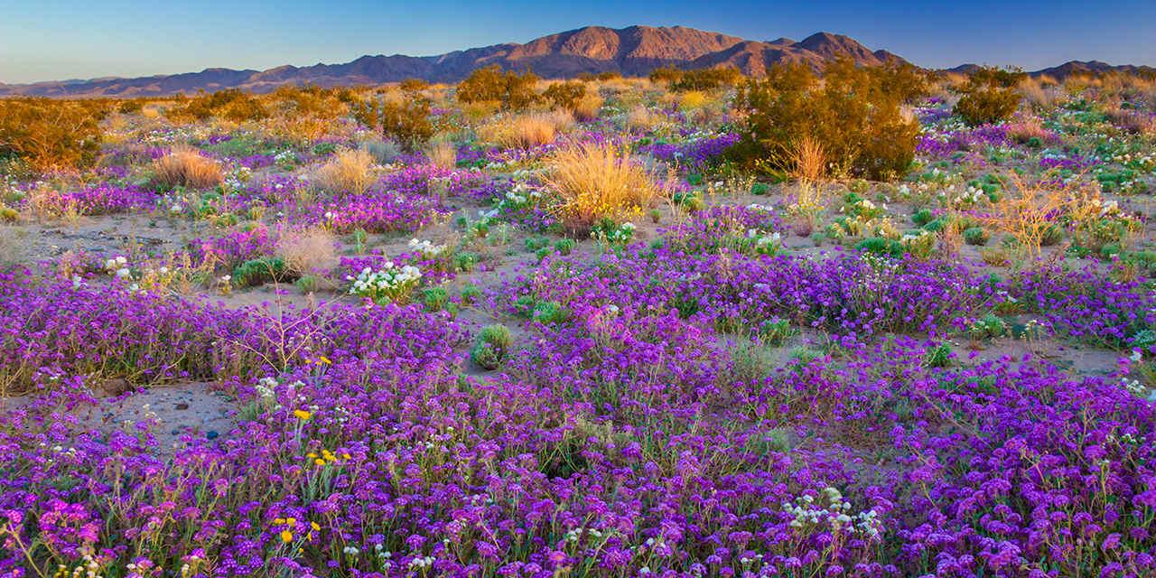 California's Spring 2019 Wildflower Forecast