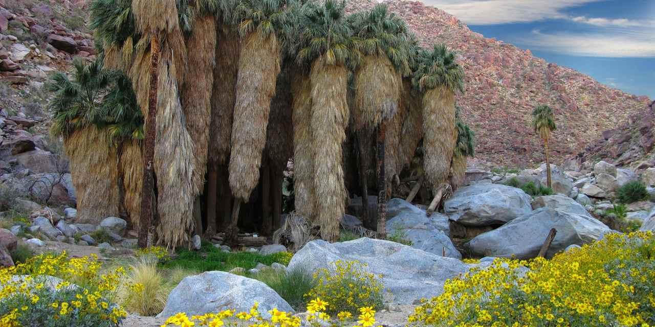 Borrego Palm Canyon Campground