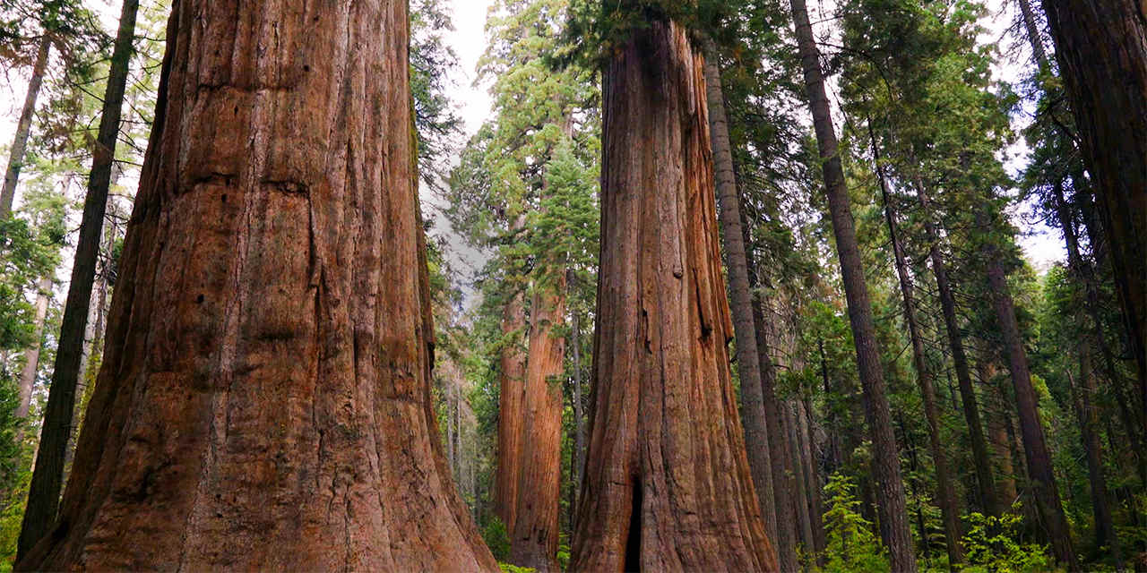 5 Amazing Things to do Near Calaveras Big Trees State Park
