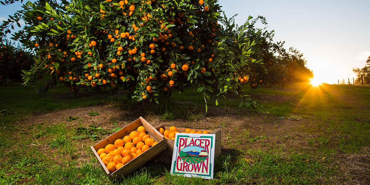 Placer Citrus Restaurant Week