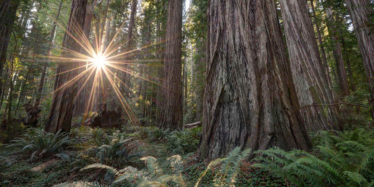 La guida degli esperti alla Redwood Coast in California