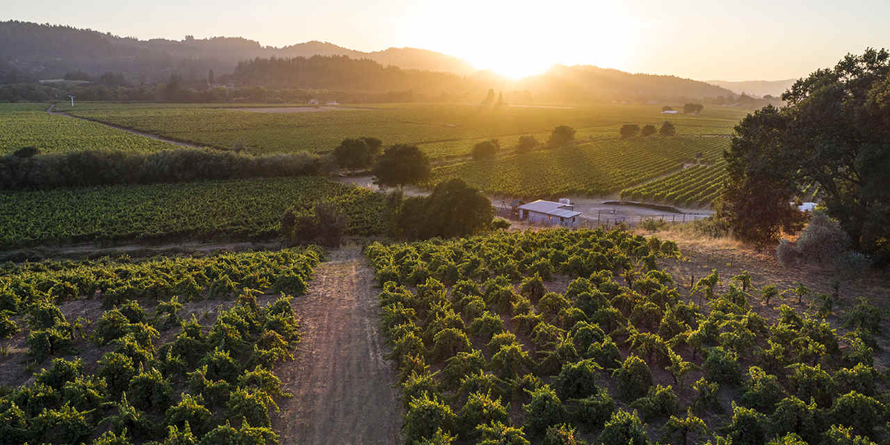Help California Wine Country Recover—by Visiting
