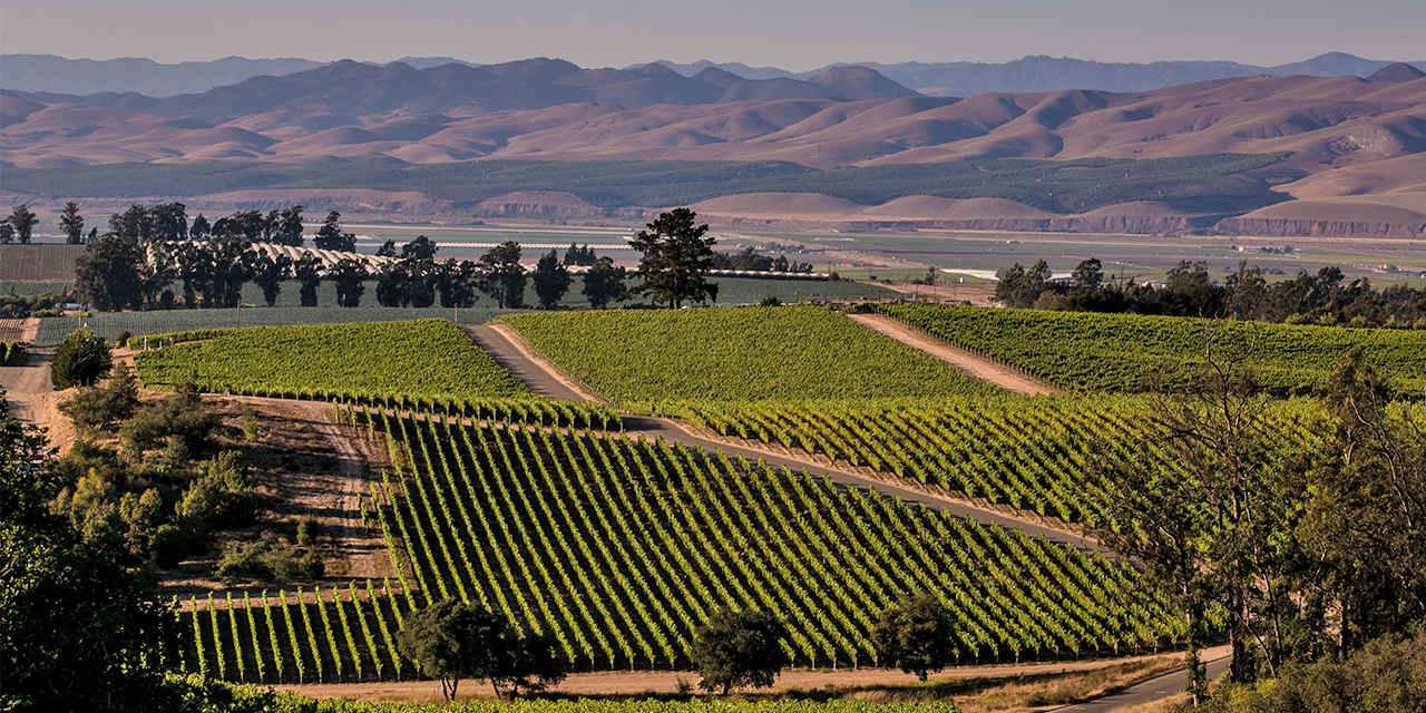 Santa Maria Valley Wine Trail
