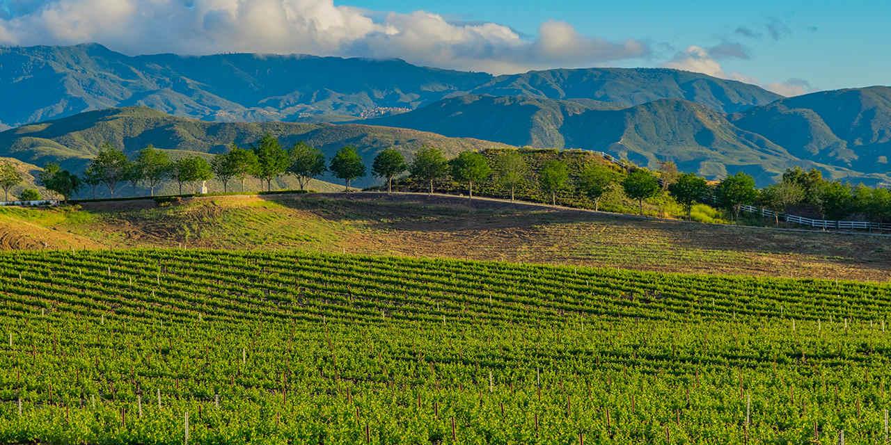 La región del vino en el Valle de Temecula