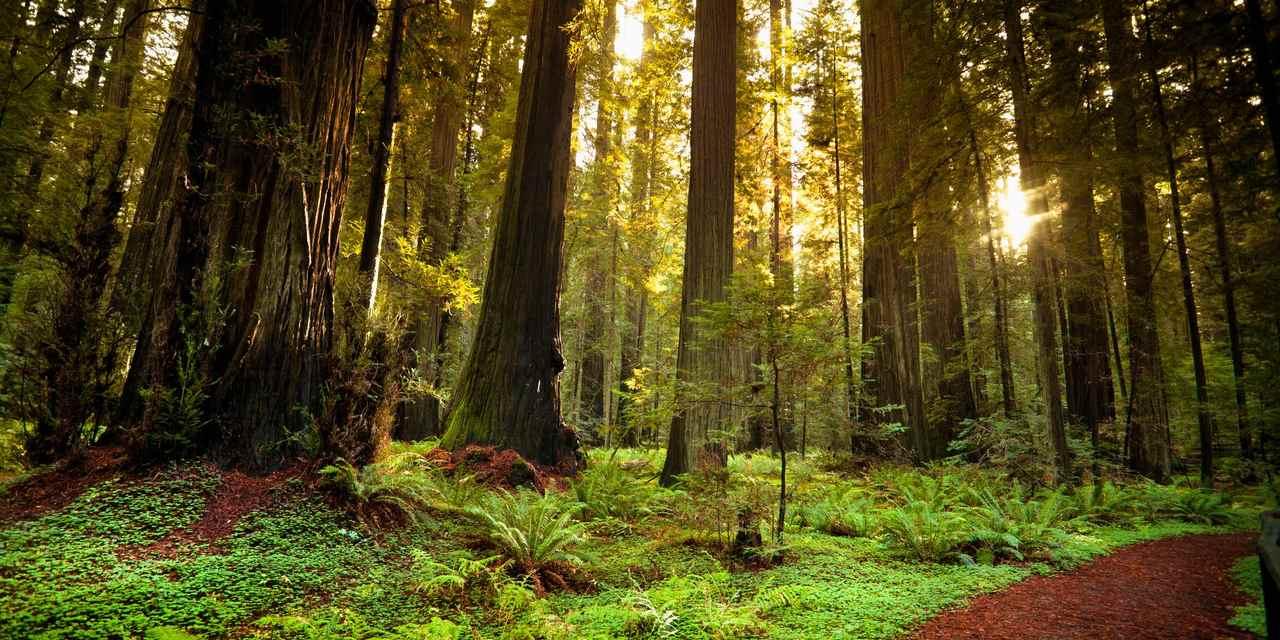 ハンボルトレッドウッド州立公園